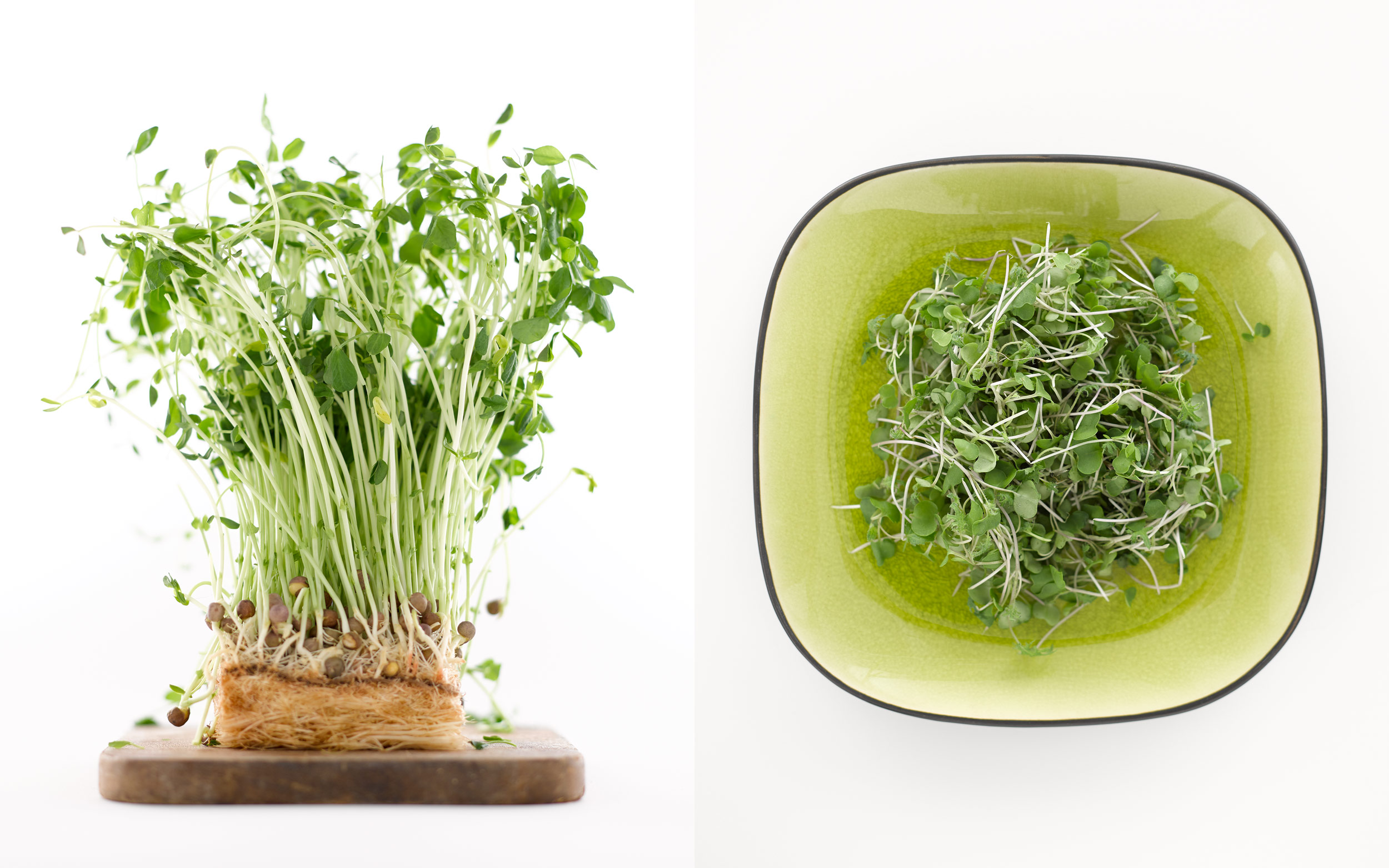 bublys-photography-sprouts-dish-and-plant-web-