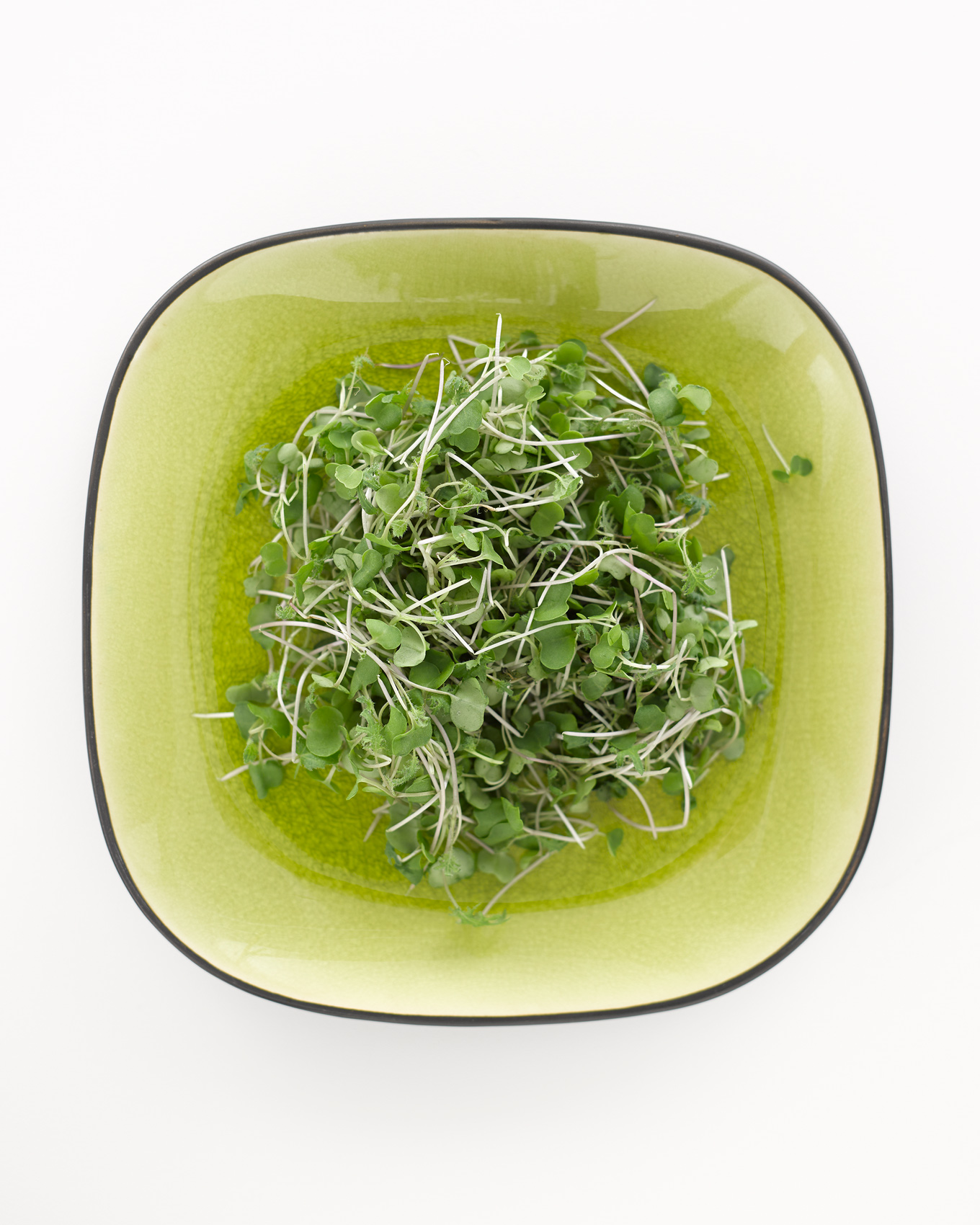 bublys-photography-sprouts-plate-web